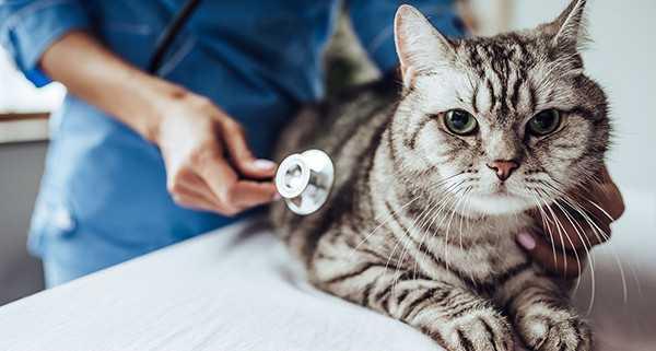 Kedi Aşıları Hakkında Bilmeniz Gerekenler